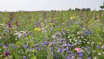 Meer dan 200 Friezen sturen hun initiatieven voor meer biodiversiteit naar de provincie