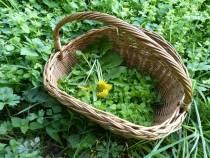 Online lentecursus eetbare wilde planten