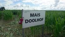Maïsdoolhof Witmarsum eindelijk weer open!