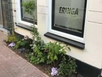 Wie heeft de mooiste gevel- of vergroende tuin van Súdwest-Fryslân?